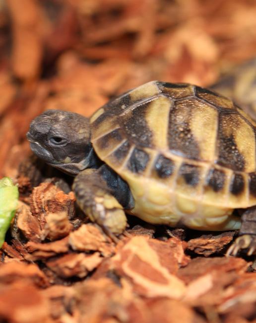 schildkröten kaufen zoogeschäft