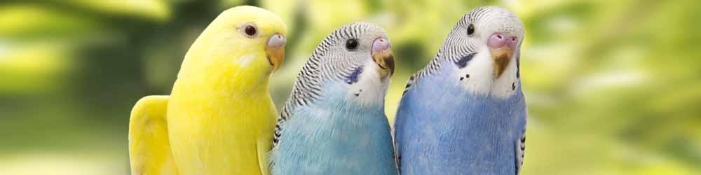 Vogel Abteilung